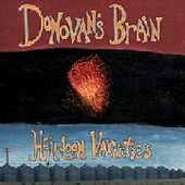DONOVAN'S BRAIN-Heirloom Varieties